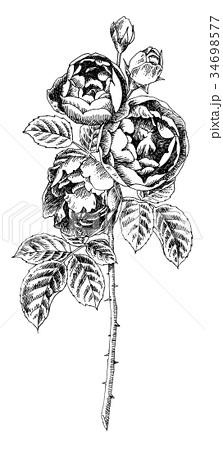 ボールペンで描いたバラの花 34698577