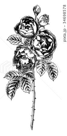ボールペンで描いたバラの花 34698578
