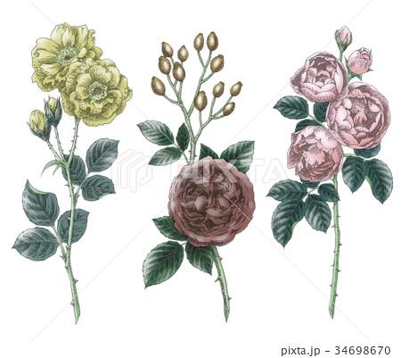 ボールペンで描いた石版画ふうのバラの花 34698670