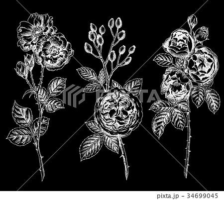 ボールペンで描いた白黒反転のバラの花 34699045