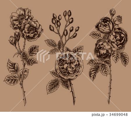 ボールペンで描いたバラの花 34699048