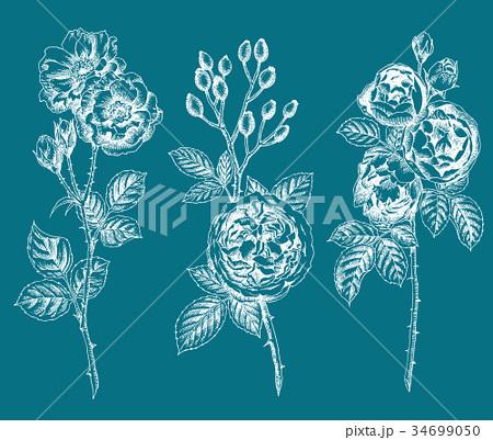 ボールペンで描いたバラの花 34699050