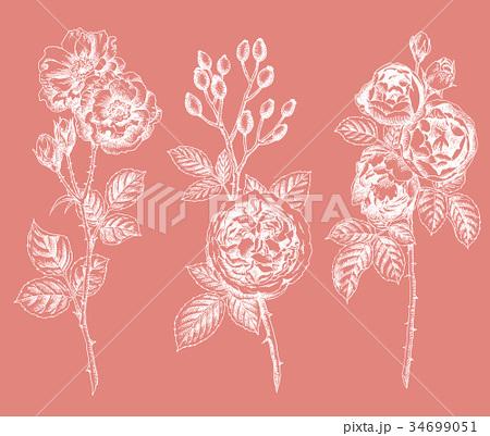 ボールペンで描いたバラの花 34699051