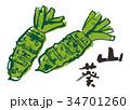 山葵 わさび 水彩画 筆文字 34701260