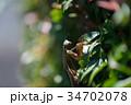 秋のカマキリ 34702078