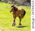 馬 グリーン 緑色の写真 34704213