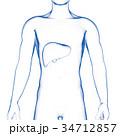 肝臓 内臓 男性のイラスト 34712857