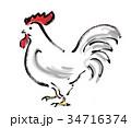 鶏 酉 雄鶏のイラスト 34716374