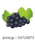 秋の味覚 フルーツ 葡萄のイラスト 34719873