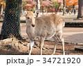 奈良公園 11月 秋の写真 34721920