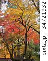 奈良公園 11月 紅葉の写真 34721932