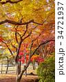 奈良公園 11月 紅葉の写真 34721937