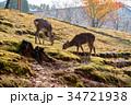 奈良公園 11月 紅葉の写真 34721938