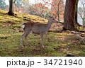 奈良公園 11月 秋の写真 34721940