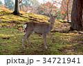 奈良公園 11月 秋の写真 34721941