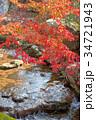 奈良公園 11月 紅葉の写真 34721943