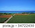 宮古島 風景 サトウキビ畑の写真 34722430