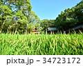 大山祇神社の稲穂 34723172