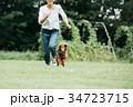 犬と走る若い女性 ミニチュアダックスフント 34723715
