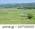 馬 牧場 放牧の写真 34726400