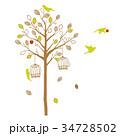 木と鳥のシルエット カジュアル 34728502