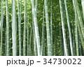 竹林 34730022