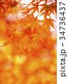 秋イメージ 紅葉 もみじ イメージ素材 背景素材 34736437