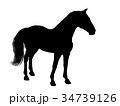 馬 ワイルド ベクタのイラスト 34739126