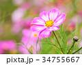 夏 抽象的 背景の写真 34755667