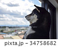 窓際の黒柴 34758682