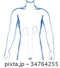 腎臓 男性 内臓のイラスト 34764255