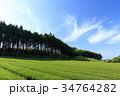 風景 静岡 茶畑の写真 34764282