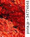 紅葉 カエデ 葉の写真 34774648