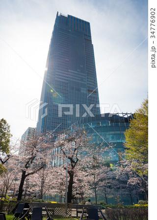 東京ミッドタウンと桜 34776902
