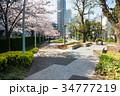 東京ミッドタウンの広場と桜 34777219