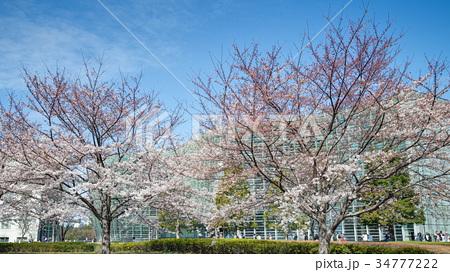 国立新美術館と桜 34777222