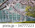 国立新美術館と桜 34777223