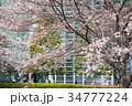 国立新美術館と桜 34777224