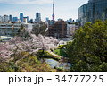 毛利庭園と東京タワーと桜 34777225