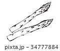 アスパラガス 水彩画 34777884