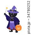 ハロウィン 猫 黒猫のイラスト 34780252