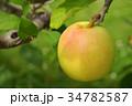 リンゴ りんご 林檎の写真 34782587