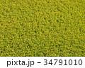 稲 田んぼ 稲作の写真 34791010