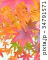 紅葉 カエデ 葉の写真 34791571