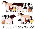 農場の動物たち グループ 34793728