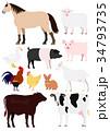農場の動物たち 素材 34793735