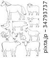 農場の動物たち 素材 線画 34793737