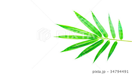 bamboo leaves isolated on white backgroundの写真素材 [34794491] - PIXTA