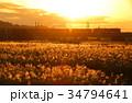 秋の多摩川の夕焼けと貨物列車 34794641