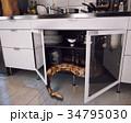 ヘビ 蛇 キッチンのイラスト 34795030